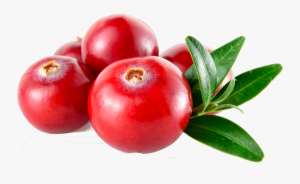 cranberries healthy fruits image